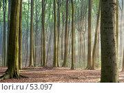 Купить «Солнечное утро в лесу ранней осенью. Солнечные лучи видны в легком тумане», фото № 53097, снято 22 мая 2018 г. (c) Михаил Лавренов / Фотобанк Лори