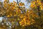 Золотая осень, фото № 53297, снято 12 октября 2006 г. (c) Argument / Фотобанк Лори