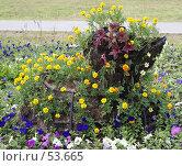 Купить «Цветочная клумба в виде утенка на улице г.Дмитрова», фото № 53665, снято 9 июня 2007 г. (c) Julia Nelson / Фотобанк Лори