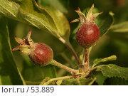 Купить «Яблочки», фото № 53889, снято 4 июня 2007 г. (c) Смирнова Лидия / Фотобанк Лори
