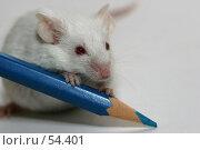 Купить «Мышонок пишет синим карандашом», фото № 54401, снято 21 апреля 2007 г. (c) Елена Мельникова / Фотобанк Лори