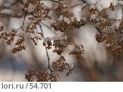 Наледи на траве. Стоковое фото, фотограф Александр Волков / Фотобанк Лори