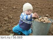 Купить «Ребенок кладет картошку в ведро», фото № 56069, снято 14 мая 2004 г. (c) Останина Екатерина / Фотобанк Лори