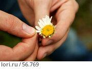 Купить «Любит? Не Любит? Гадание на ромашке», фото № 56769, снято 30 июня 2007 г. (c) Валерия Потапова / Фотобанк Лори
