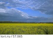 Купить «Желтое море. Рапсовое поле.», фото № 57065, снято 23 января 2018 г. (c) Игорь Соколов / Фотобанк Лори
