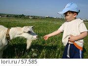 Купить «Мальчик кормит козу», фото № 57585, снято 9 июня 2006 г. (c) Останина Екатерина / Фотобанк Лори
