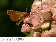 Купить «Бабочка», фото № 57905, снято 1 июля 2007 г. (c) Смирнова Лидия / Фотобанк Лори