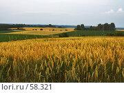 Купить «Вечернее поле», фото № 58321, снято 5 июля 2006 г. (c) Михаил Лавренов / Фотобанк Лори