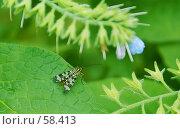 Купить «Модница», фото № 58413, снято 12 июня 2007 г. (c) Анатолий Теребенин / Фотобанк Лори