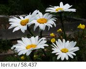 Купить «Белый танец», фото № 58437, снято 23 июня 2007 г. (c) Анатолий Теребенин / Фотобанк Лори