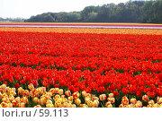 Купить «Море тюльпанов», эксклюзивное фото № 59113, снято 19 апреля 2007 г. (c) Natalia Nemtseva / Фотобанк Лори