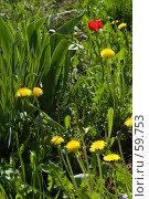 Купить «Дикие городские цветы, одуванчики и мак», фото № 59753, снято 23 июня 2005 г. (c) Harry / Фотобанк Лори