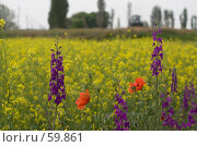 Купить «Сурепка на поле», фото № 59861, снято 28 мая 2007 г. (c) Алексей Судариков / Фотобанк Лори