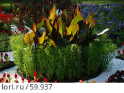 Купить «Клумба», фото № 59937, снято 5 июля 2007 г. (c) Дмитрий Карасев / Фотобанк Лори