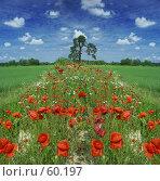 Купить «Летний пейзаж с маками, зеленым лугом и голубым небом», фото № 60197, снято 20 января 2018 г. (c) Игорь Соколов / Фотобанк Лори