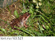 Купить «Лягушка в траве», эксклюзивное фото № 63521, снято 14 июля 2007 г. (c) Юлия Кузнецова / Фотобанк Лори