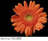 Купить «Гербера», фото № 63889, снято 19 мая 2007 г. (c) Евдокимова Мария Борисовна / Фотобанк Лори