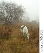 Купить «Лошадь в тумане», эксклюзивное фото № 65833, снято 17 августа 2018 г. (c) Александр Тараканов / Фотобанк Лори