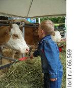 Купить «Мальчик и корова», фото № 66569, снято 20 июня 2006 г. (c) Илья Садовский / Фотобанк Лори