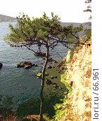 Купить «Дерево у обрыва», фото № 66961, снято 14 июля 2007 г. (c) Алена Сафронова / Фотобанк Лори