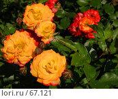 Купить «Цветы и листья под ярким солнцем», фото № 67121, снято 12 июня 2004 г. (c) Harry / Фотобанк Лори
