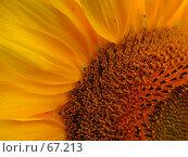 Купить «Фрагмент цветка подсолнечника», фото № 67213, снято 30 июля 2004 г. (c) Harry / Фотобанк Лори