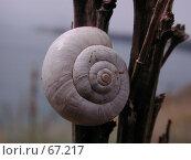 Купить «Улитка на стебле полевого растения на фоне моря», фото № 67217, снято 30 июля 2004 г. (c) Harry / Фотобанк Лори