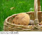Купить «Подберезовик обыкновенный Leccinum scabrum в корзине», фото № 68845, снято 20 сентября 2018 г. (c) Светлана Кучинская / Фотобанк Лори