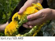 Купить «Венок из весенних одуванчиков в руках пожилой женщины», фото № 69449, снято 13 мая 2006 г. (c) Дмитрий Доможиров / Фотобанк Лори