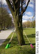 Купить «Разноцветные метла, прислоненные к дереву», фото № 69465, снято 21 апреля 2007 г. (c) Дмитрий Доможиров / Фотобанк Лори