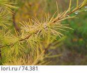 Купить «Осень. Лиственница.», фото № 74381, снято 29 августа 2005 г. (c) Кукуруза Михаил Петрович / Фотобанк Лори