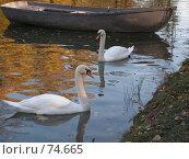 Купить «Лебеди на пруду», фото № 74665, снято 1 марта 2005 г. (c) Елена Яковенко / Фотобанк Лори