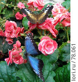 Купить «Из серии: живые цветы», фото № 78061, снято 15 июля 2007 г. (c) Алексей Ладыгин / Фотобанк Лори