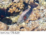 Купить «Рыбы Красного моря», фото № 78629, снято 22 августа 2007 г. (c) Лифанцева Елена / Фотобанк Лори