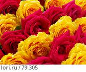 Купить «Ковер из роз», фото № 79305, снято 12 августа 2007 г. (c) Angelina Ashukina / Фотобанк Лори