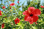 Цветы, фото № 80529, снято 30 августа 2007 г. (c) Михаил Мандрыгин / Фотобанк Лори