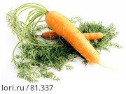 Купить «Две морковки», фото № 81337, снято 2 сентября 2007 г. (c) Анатолий Теребенин / Фотобанк Лори