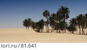 Купить «Тунис. Караван.», фото № 81641, снято 30 июля 2007 г. (c) Олег Безручко / Фотобанк Лори