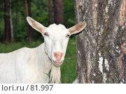 Купить «Коза-дереза и комарики», фото № 81997, снято 29 июля 2007 г. (c) Ivan I. Karpovich / Фотобанк Лори