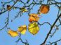 Осенние листья, фото № 83821, снято 17 октября 2006 г. (c) Надежда Болотина / Фотобанк Лори