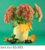 Купить «Осенний букет на зеленом фоне», фото № 83993, снято 13 сентября 2007 г. (c) Елена Блохина / Фотобанк Лори