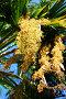 Плоды пальмы, фото № 84489, снято 21 августа 2007 г. (c) Лифанцева Елена / Фотобанк Лори