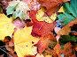 Осень, опавшие листья, фото № 84709, снято 20 сентября 2017 г. (c) only / Фотобанк Лори