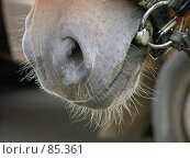 Купить «Лошадиная морда», фото № 85361, снято 17 августа 2006 г. (c) vitamin13 / Фотобанк Лори