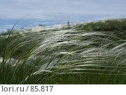 Купить «Цветение ковыля», фото № 85817, снято 18 мая 2006 г. (c) Борис Панасюк / Фотобанк Лори