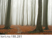 Купить «Таинственный осенний буковый лес», фото № 88281, снято 30 ноября 2006 г. (c) Михаил Лавренов / Фотобанк Лори