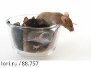 Купить «Мышки в стеклянной ёмкости», фото № 88757, снято 23 сентября 2007 г. (c) Сергей Лаврентьев / Фотобанк Лори