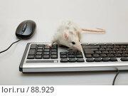 Компьютерная мышь. Стоковое фото, фотограф Argument / Фотобанк Лори