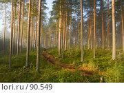 Купить «Утро в сосновом лесу», фото № 90549, снято 8 сентября 2007 г. (c) podfoto / Фотобанк Лори