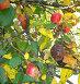 В семье не без урода: гнилой плод, фото № 91661, снято 30 сентября 2007 г. (c) Татьяна Юни / Фотобанк Лори